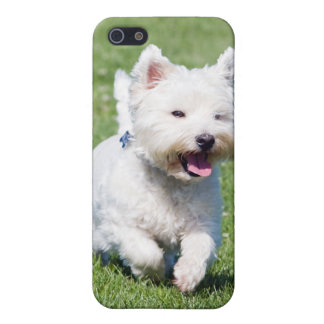 West Highland White Terrier, westie dog cute photo Case For iPhone SE/5/5s