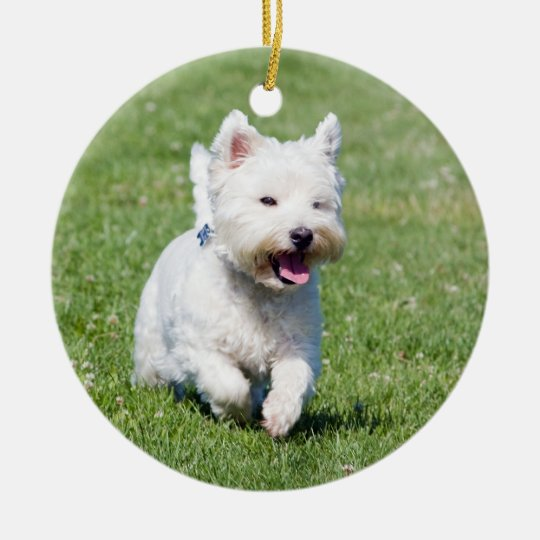 West Highland White Terrier, westie dog cute photo Ceramic Ornament