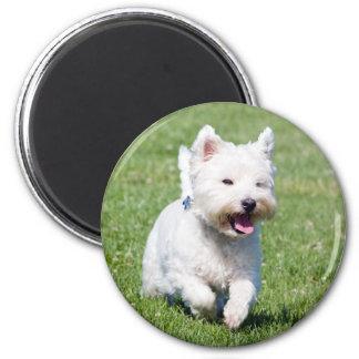 West Highland White Terrier, westie dog cute photo Magnet