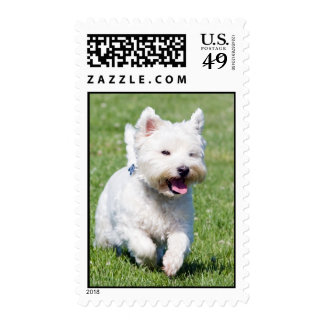 West Highland White Terrier, westie dog cute photo Stamp