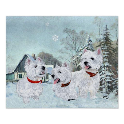 West Highland White Terriers in the Snow Poster