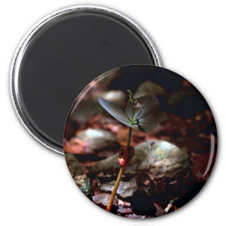 West Indian Mahogany Seedling Magnets