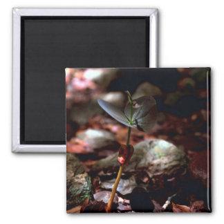 West Indian Mahogany Seedling Fridge Magnet