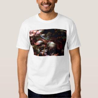 West Indian Mahogany Seedling Shirt