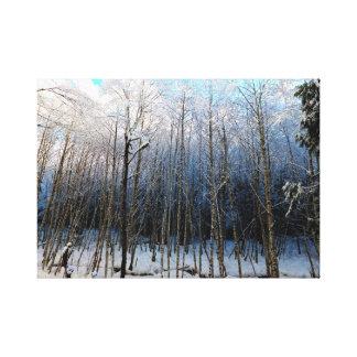 West Side Road, Rainier NP Canvas Print