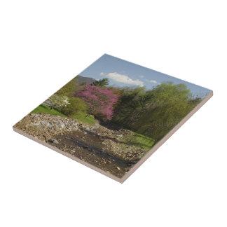 West Virginia Redbud Creek Tile