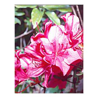 West Virginia Rhododendron Maximum Letterhead Design