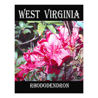 West Virginia Rhododendron Maximum Personalized Letterhead