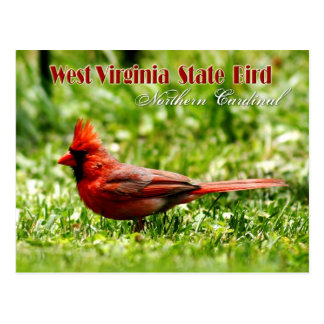 West Virginia State Bird - Northern Cardinal Postcard