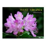 West Virginia State Flower: Rhododendron Postcard