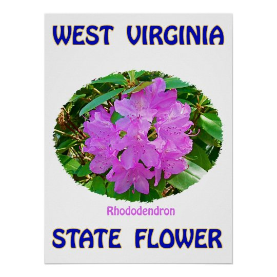 West Virginia State Flower, Rhododendron, Poster