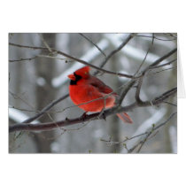 WestCreek Red Cardinal (Blank) Card