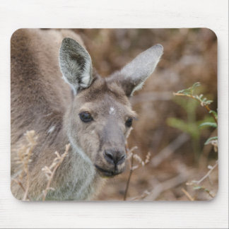 Western Australia, Perth, Yanchep National Park Mouse Pad