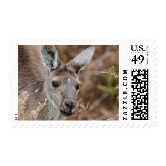 Western Australia, Perth, Yanchep National Park Postage