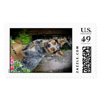 Western Australian Cattle Dog Apparel & Gifts Stamp