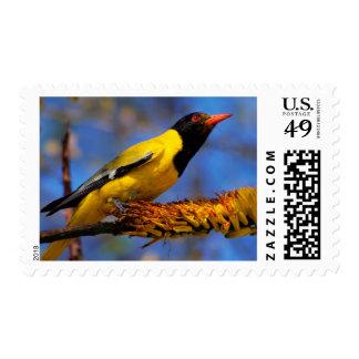 Western Black-Headed Oriole Postage