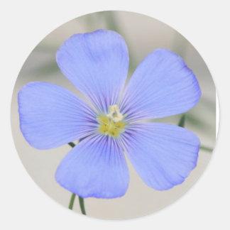 Western Blue Flax Blossom Classic Round Sticker