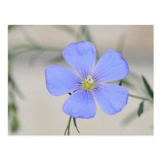 Western Blue Flax Blossom Postcard