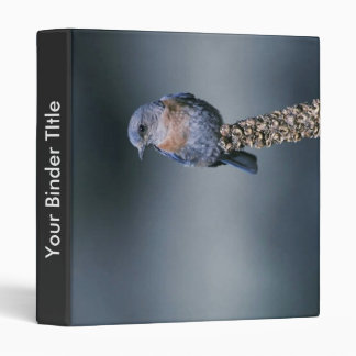 Western bluebird binder