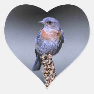 Western Bluebird Heart Sticker