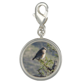 Western Bluebird in Mesquite Tree Charms