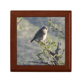 Western Bluebird in Mesquite Tree Keepsake Box