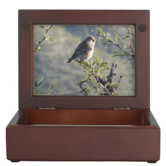 Western Bluebird in Mesquite Tree Memory Boxes