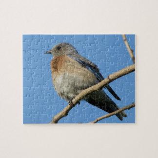 Western Bluebird Jigsaw Puzzle