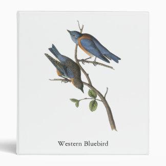 Western Bluebird, John Audubon 3 Ring Binder