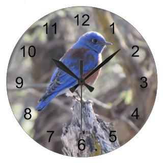 Western Bluebird Large Clock