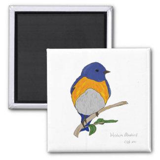 Western Bluebird Magnet