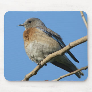 Western Bluebird Mouse Pad