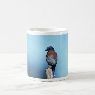 Western bluebird mugs