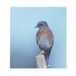 Western bluebird notepad