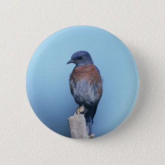 Western Bluebird Pinback Button