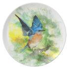 Western Bluebird Plate