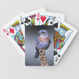 Western Bluebird Playing Cards