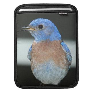 Western bluebird sleeve for iPads