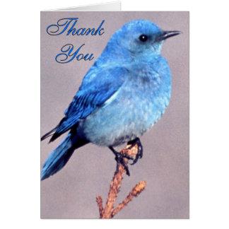 Western Bluebird Thank You Card