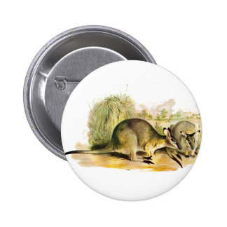 Western Brush wallaby Pinback Buttons
