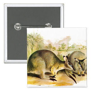 Western Brush wallaby Buttons