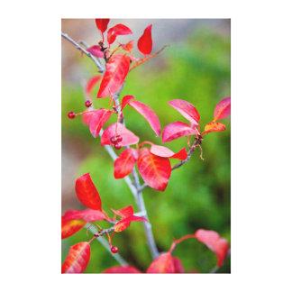 Western Choke Cherry (Prunus Virginiana) In Fall Canvas Print