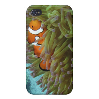 Western Clownfish ( Amphiprion oaris ), in iPhone 4/4S Cover