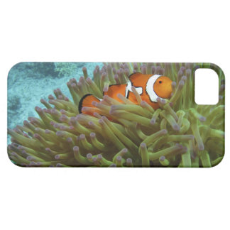 Western Clownfish ( Amphiprion ocellaris ), in iPhone SE/5/5s Case