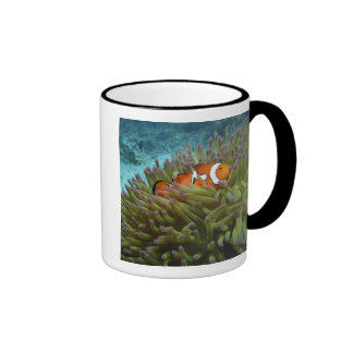 Western Clownfish ( Amphiprion ocellaris ), in Mug