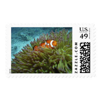 Western Clownfish ( Amphiprion ocellaris ), in Postage