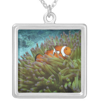Western Clownfish ( Amphiprion ocellaris ), in Square Pendant Necklace