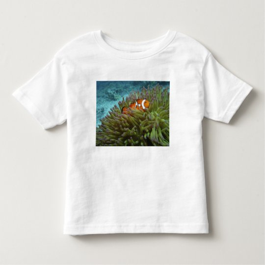 Western Clownfish ( Amphiprion ocellaris ), in Toddler T-shirt