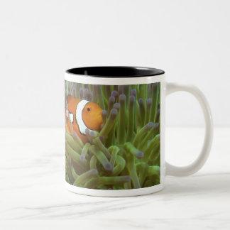 Western Clownfish ( Amphiprion ocellaris ), in Two-Tone Coffee Mug