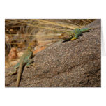 Western Collared Lizards in Colorado Card